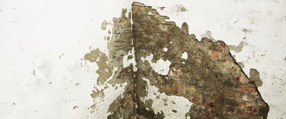 zawilgocony mur zceieł